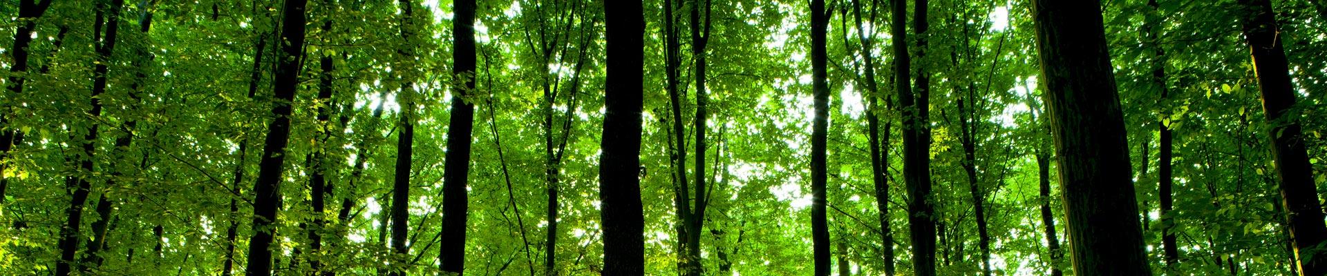 green_rid